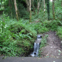 Forest dog walk near Kingscourt, RoI - Dog walks in Ireland