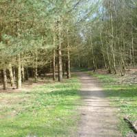 A614 Woodland dog walk near Nottingham, Nottinghamshire - Dog walks in Nottinghamshire