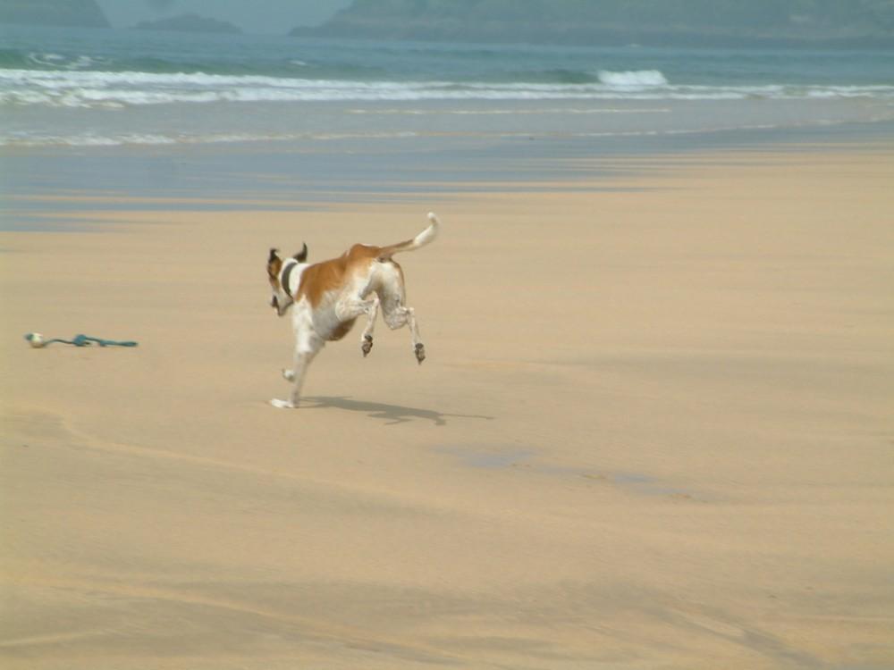 Treyarnon Bay dog-friendly beach, Cornwall - Dog walks in Cornwall