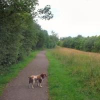Grassmoor dog walk near Chesterfield, Derbyshire - Dog walks in Derbyshire