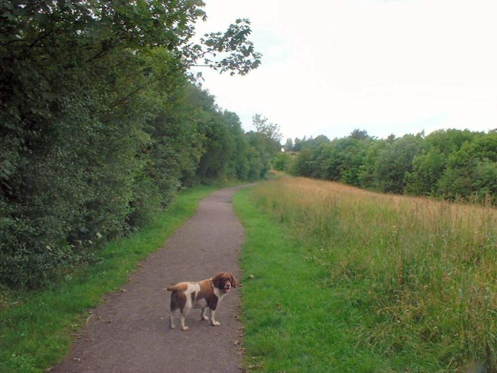Grassmoor dog walk near Chesterfield, Derbyshire - Dog walks in Derbyshire