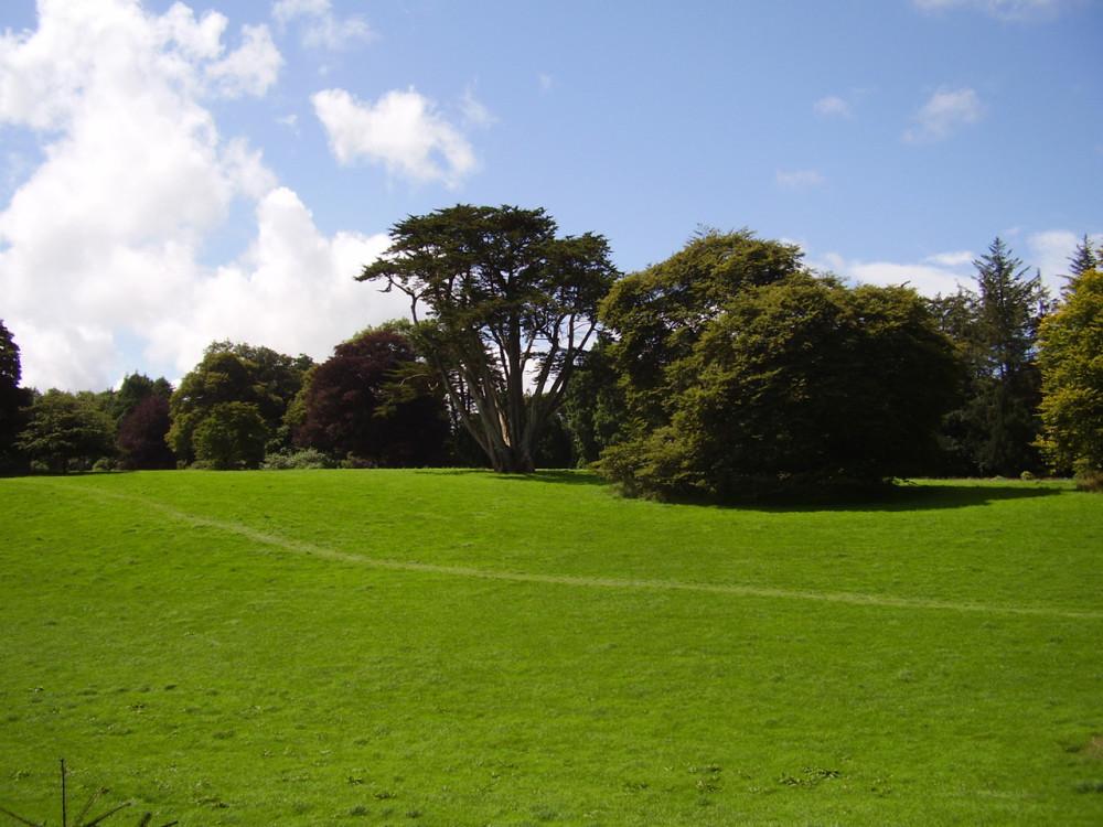 A30 doggiestop near Trescowe, Cornwall - Dog walks in Cornwall