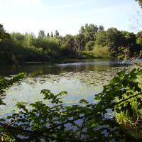 Colwick Country Park dog walk, Nottingham, Nottinghamshire - Dog walks in Nottinghamshire