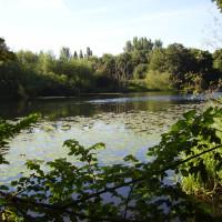 A612 Country Park dog walk, Nottingham, Nottinghamshire - Dog walks in Nottinghamshire