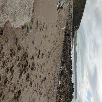 Portwrinkle Beach - dog-friendly, Cornwall - 20191015_120946.jpg