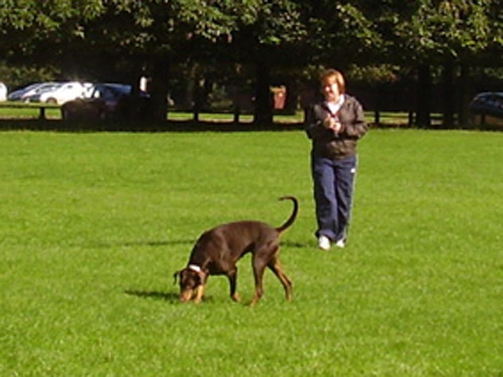 Wollaton Park dog walk, Nottinghamshire - Dog walks in Nottinghamshire