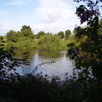 A453 Woodland dog walk, Nottinghamshire - Dog walks in Nottinghamshire