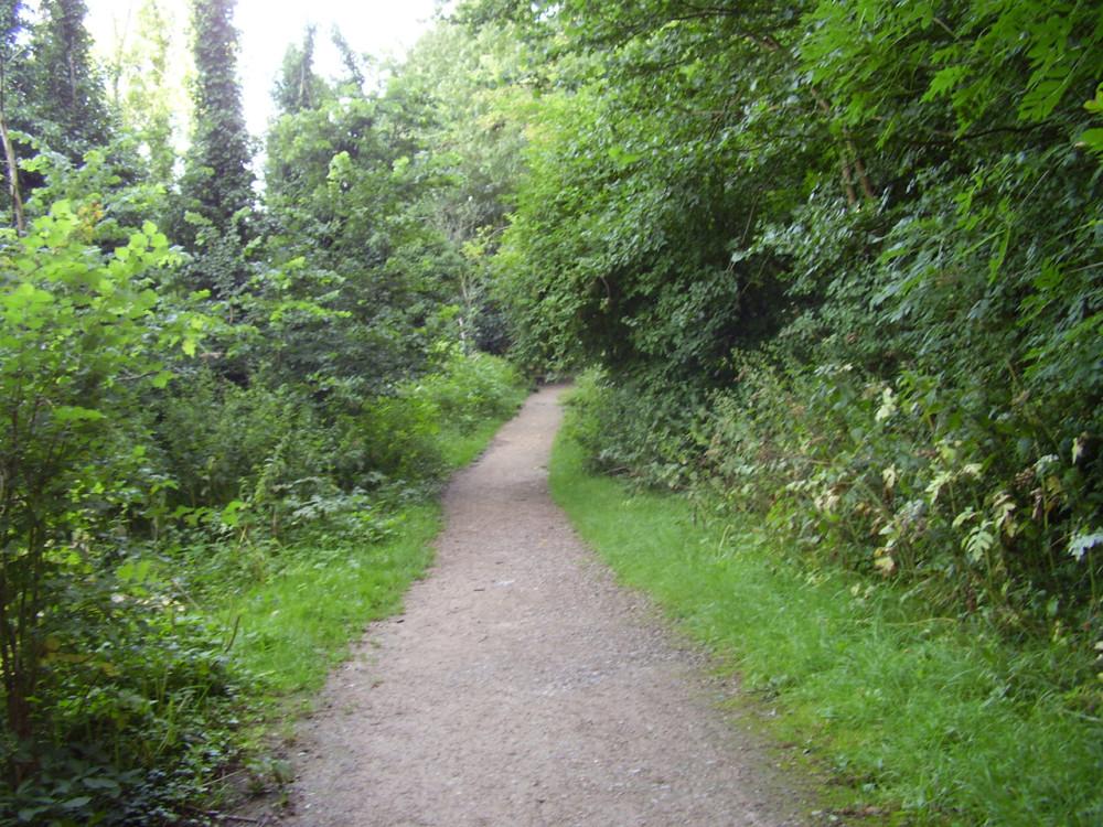 Clifton Grove Woods dog walk, Clifton, Nottinghamshire - Dog walks in Nottinghamshire