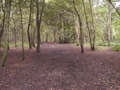 Allestree dog walks, Derbyshire - Driving with Dogs