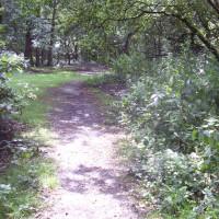 Allestree dog walks, Derbyshire - Dog walks in Derbyshire