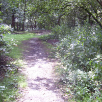 Allestree local dog walks, Derbyshire - Dog walks in Derbyshire
