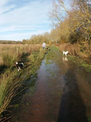 Wander for hours, a different route every day!, Leicestershire - Driving with Dogs