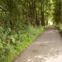 Newstead Abbey dog walk, Nottinghamshire - Dog walks in Nottinghamshire