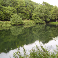 Creswell Crags dog walk, Nottinghamshire - Dog walks in Nottinghamshire