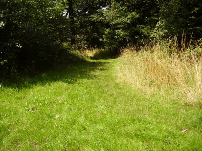 A42 Junction 12 Woodland dog walk, Leicestershire - Driving with Dogs