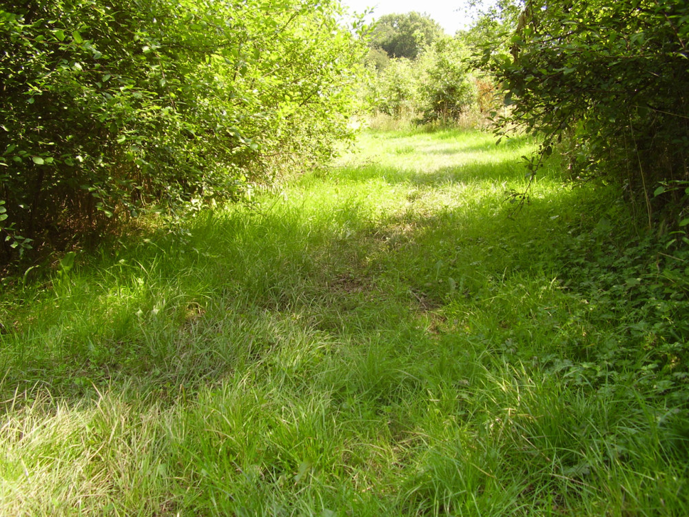 A42 Junction 12 Woodland dog walk, Leicestershire - Dog walks in Leicestershire