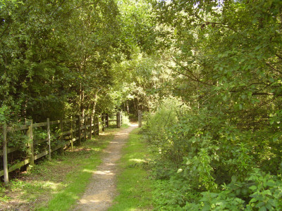 A42 Junction 13 Nature Reserve dog walk, Leicestershire - Driving with Dogs