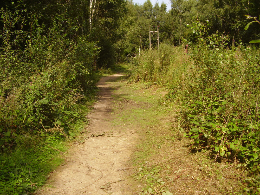 A42 Junction 13 Nature Reserve dog walk, Leicestershire - Dog walks in Leicestershire