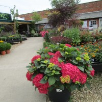 Wistow Rural Centre - dog-friendly shopping, Leicestershire - Leicestershire dog-friendly craft centre