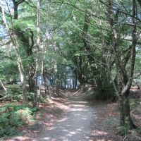 A25 woodland dog walk near Dorking, Surrey - Surrey dog walk