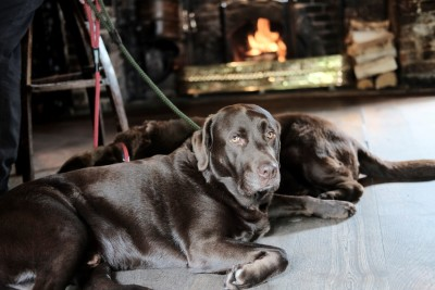 Sonning-on-Thames dog walk and dog-friendly pub, Berkshire - Driving with Dogs