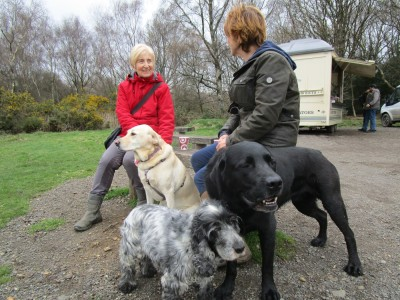 M25 Junction 8 dog walk and dog-friendly pub, Surrey - Driving with Dogs