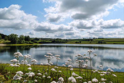 A396 Popular lakeside dog walk and cafe, Somerset - Driving with Dogs