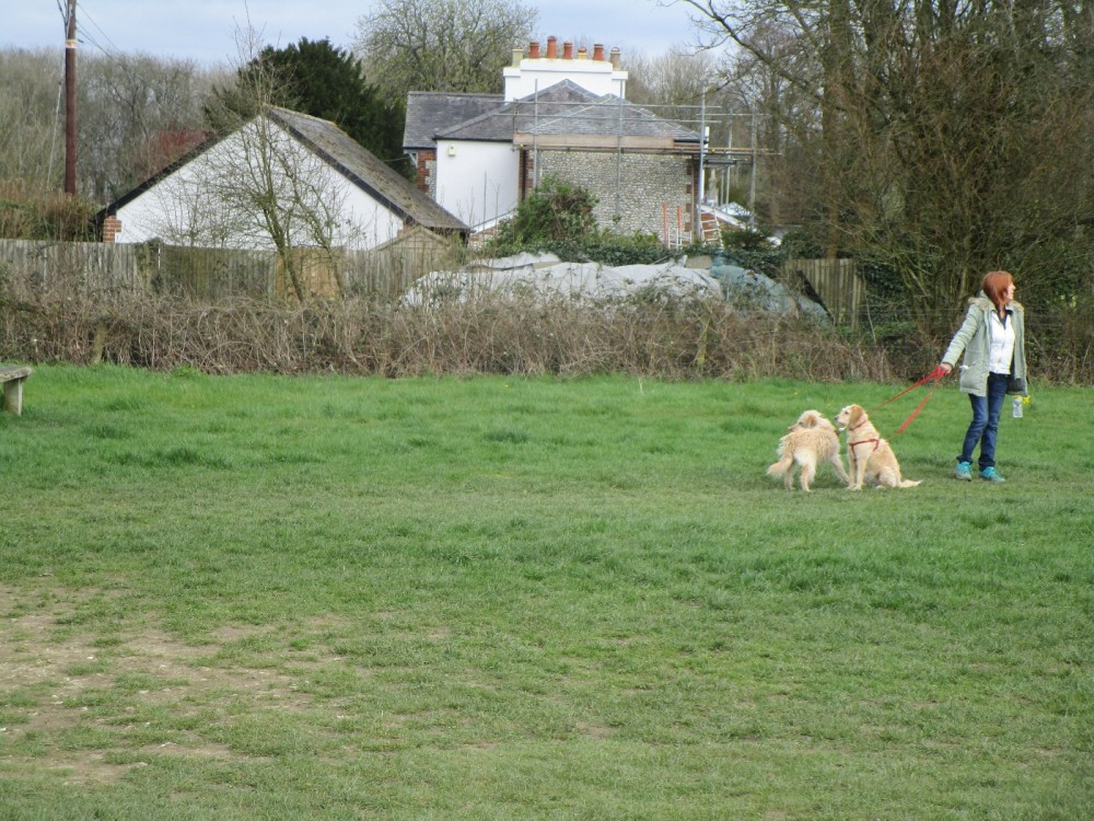 A24 dog walk with views near Dorking, Surrey - Surrey dog-friendly pubs with dog walks.JPG