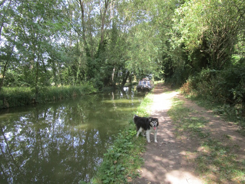 Welford dog walk with pub and tea-rooms, Northamptonshire - Dog walk and dog-friendly pub Northamptonshire