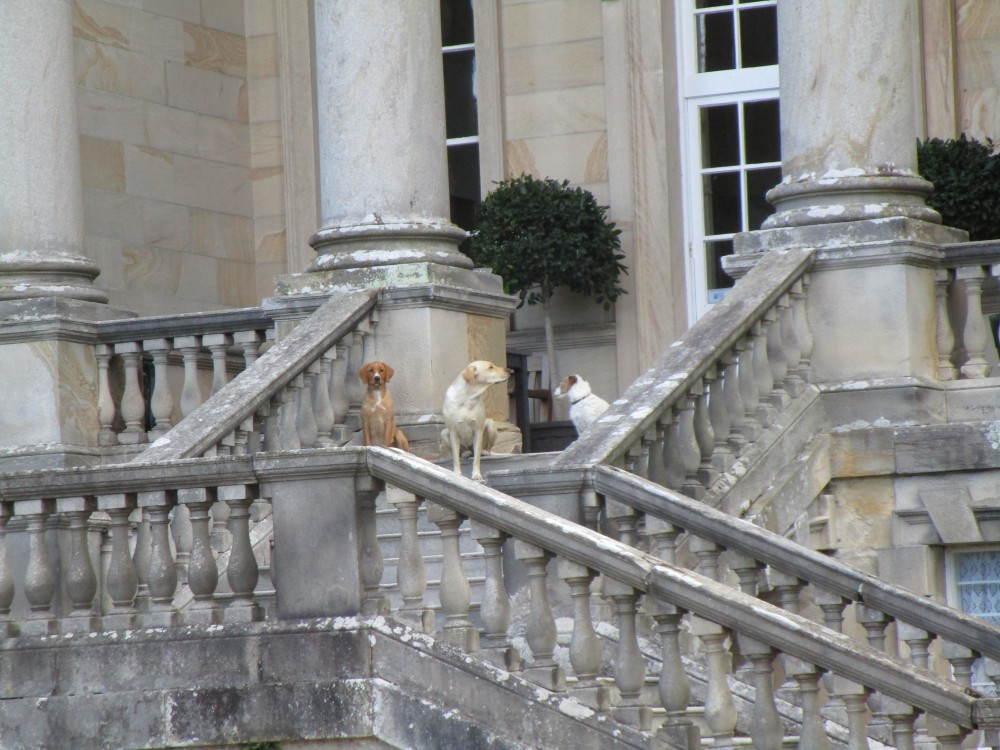 Garden ramble with the dog, Yorkshire - Yorkshire dog walk