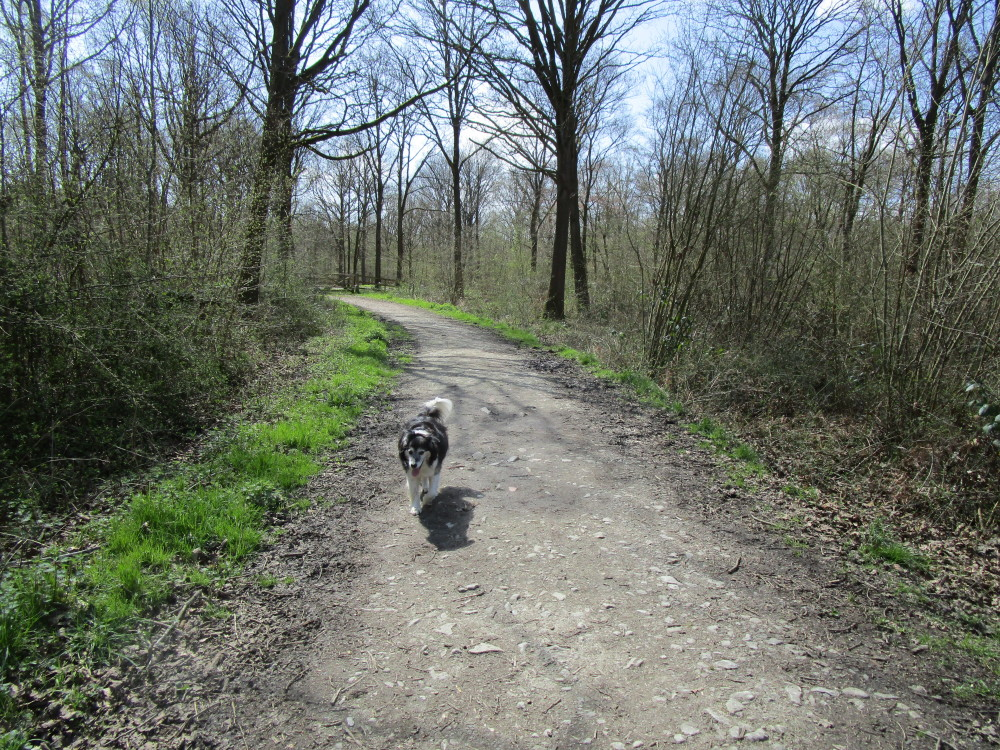 Woodland dog walk and dog-friendly pub, Worcestershire - Dog walks in Worcestershire