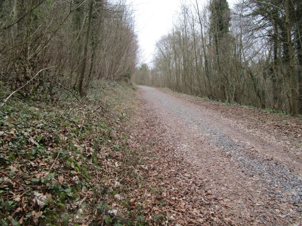 Quiet woodland dog walk, West Sussex - Sussex dog walks with dog-friendly pub.JPG