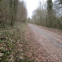 Quiet woodland dog walk, West Sussex - Sussex dog walks with dog-friendly pub.JPG