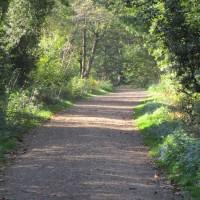 Blean Woods dog walk, Kent - Kent dog-friendly dog walk and dog-friendly pub