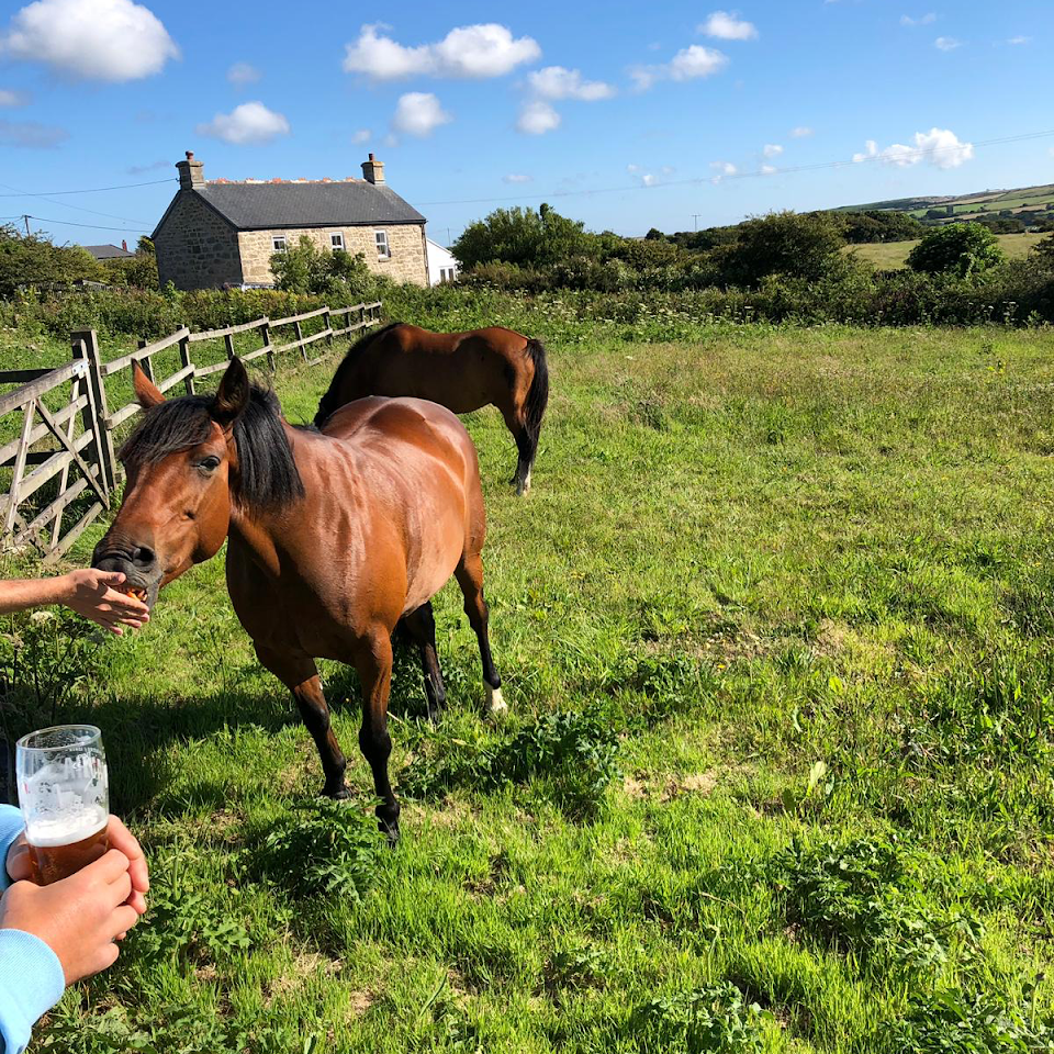 Remote dog-friendly inn with B&B and camping, Cornwall - Cornwall dog-friendly B&B.png
