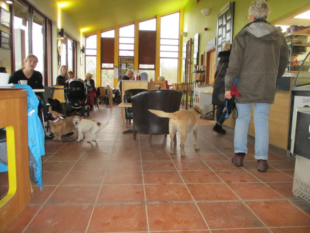 A42 dog-friendly cafe and dog walks near Ashby, Leicestershire - Leicestershire dog-friendly cafes with dog walks.JPG