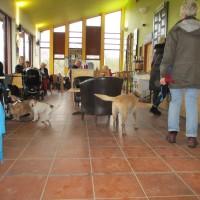 A42 dog-friendly cafe and dog walks near Ashby, Leicestershire - Leicestershire dog-friendly cafes with dog walks.JPG