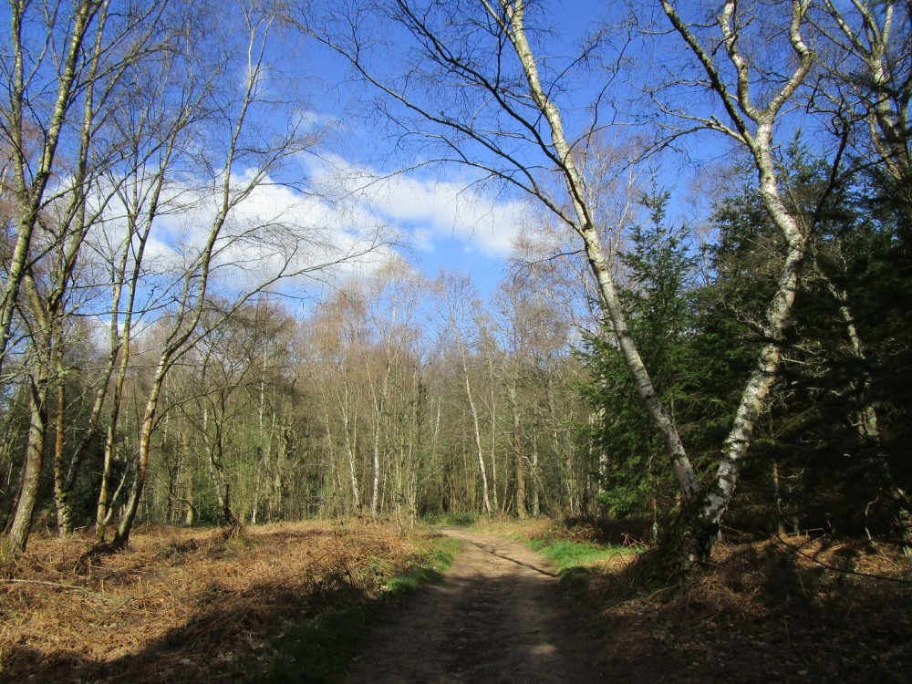 A248 Forest dog walk and a Roman temple, Surrey - Surrey dog-friendly pub with dog walk.JPG