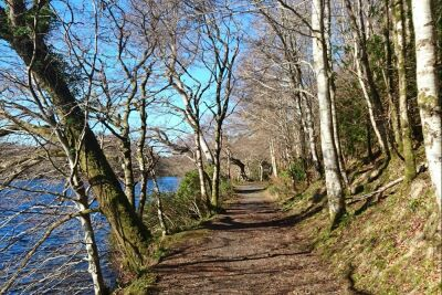 Aros Park dog walk on the Isle of Mull, Scotland - Driving with Dogs