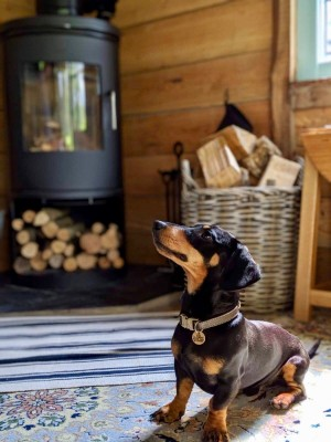 TyTwt pet-friendly holiday cottage, Wales - Driving with Dogs