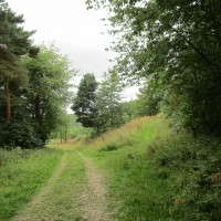 A19 Woodland dog walk and dog-friendly pub, North Yorkshire - Dog walk in Yorkshire