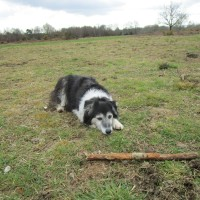 A275 Common land dog walk, East Sussex - Sussex dog walks with dog-friendly pubs.JPG