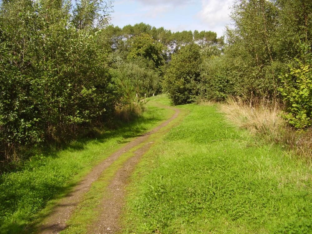 Bagworth Heath Woods dog walk, Leicestershire - Dog walks in Leicestershire