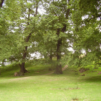 Cropston dog walks and dog friendly pub, Leicestershire - Dog walks in Leicestershire