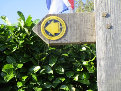 Peasmarsh dog walk and dog-friendly pub, East Sussex - Driving with Dogs