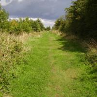 Country park dog walk near Ibstock, Leicestershire - Dog walks in Leicestershire