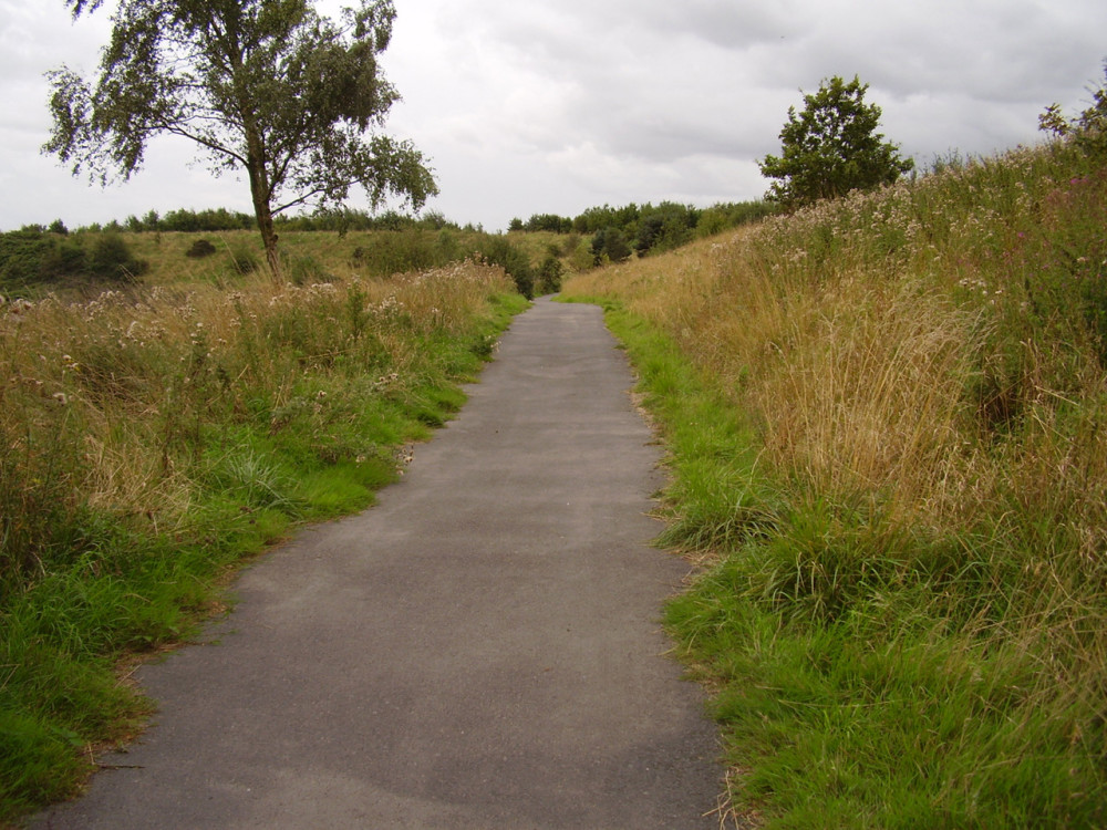 Dog walks at Snibston Country Park, Leicestershire - Dog walks in Leicestershire
