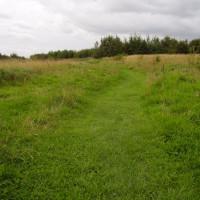 Dog walks at Snibston Country Park, Leicestershire - Dog walks in Leicestershire