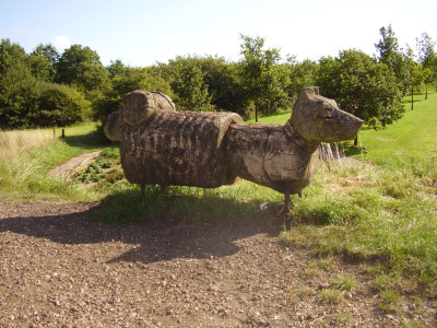 Melton Mowbray country park dog walk, Leicestershire - Driving with Dogs