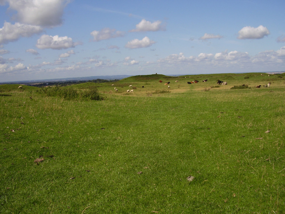 Burrough Hill dog walks, Leicestershire - Dog walks in Leicestershire